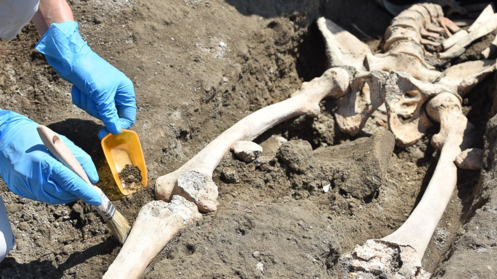Archaeologists discovered the skeleton of a man at the Roman city of Pompeii who they think fell while fleeing the volcanic explosion of Mt. Vesuvius in 79 A.D.
