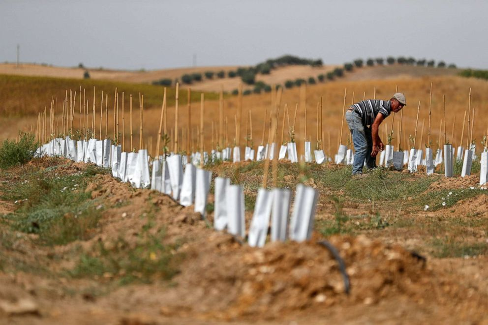 PHOTO: A worker checks the irrigation hoses on an olive plantation near Portel, Portugal, Aug. 2, 2018.