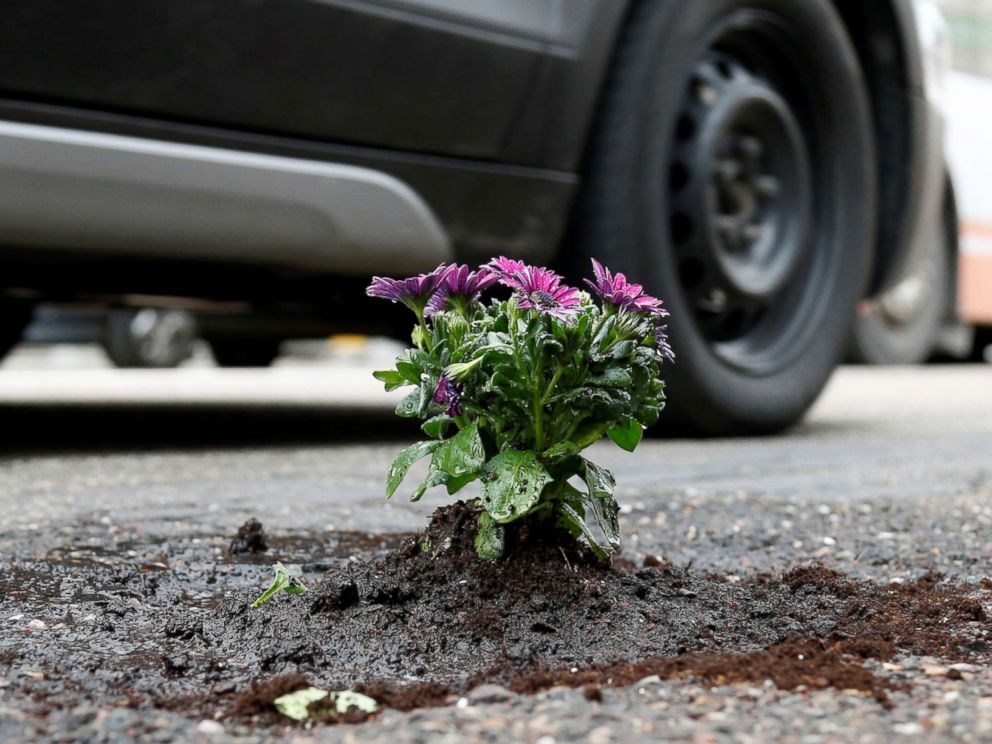 PHOTO: Flowers planted in a pothole by Brussels resident Anton Schuurmans to draw attention to the state of public roads in Brussels, Belgium, April 5, 2018.