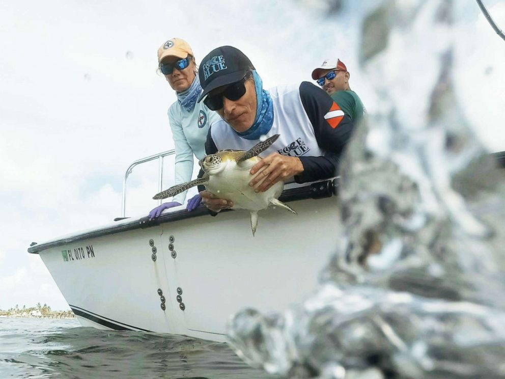 PHOTO: Force Blue mission leader Roger Sparks releases a green sea turtle back into the ocean after analysis while lead scientist from The Turtle Hospital Bette Zirkelbach, left, watches.