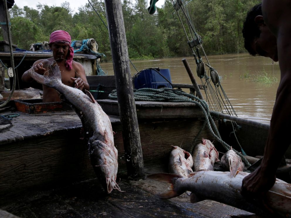 PHOTO: Fishermen unload fish off their boat at the banks of Amapa Grande River on the coast of Amapa state, in Amapa city, northern Brazil, April 1, 2017.