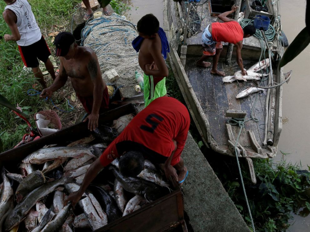 PHOTO: Fishermen unload fish from their boat on the banks of Amapa Grande River on the coast of Amapa state, in Amapa city, northern Brazil, April 1, 2017.