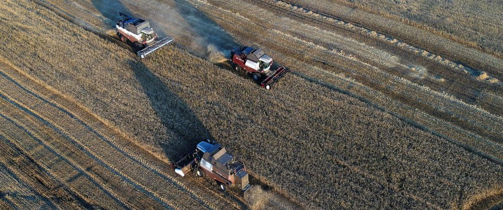 PHOTO: Combines harvest wheat in a field owned by the Siberia farming company outside the village of Ogur in Krasnoyarsk Region, Russia Sept. 8, 2019.