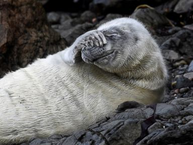 Seal pup chills out in Wales
