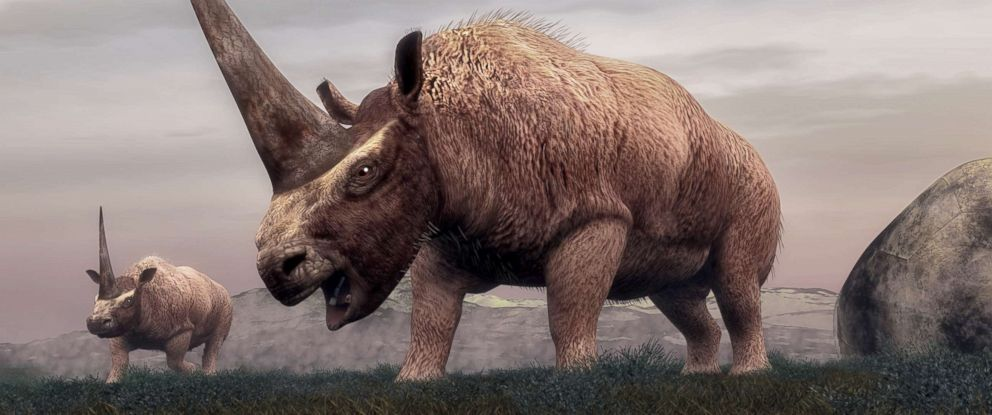 PHOTO: This stock rendering depicts the Elasmotherium mammal dinosaurs walking in the steppe grass in Siberia.