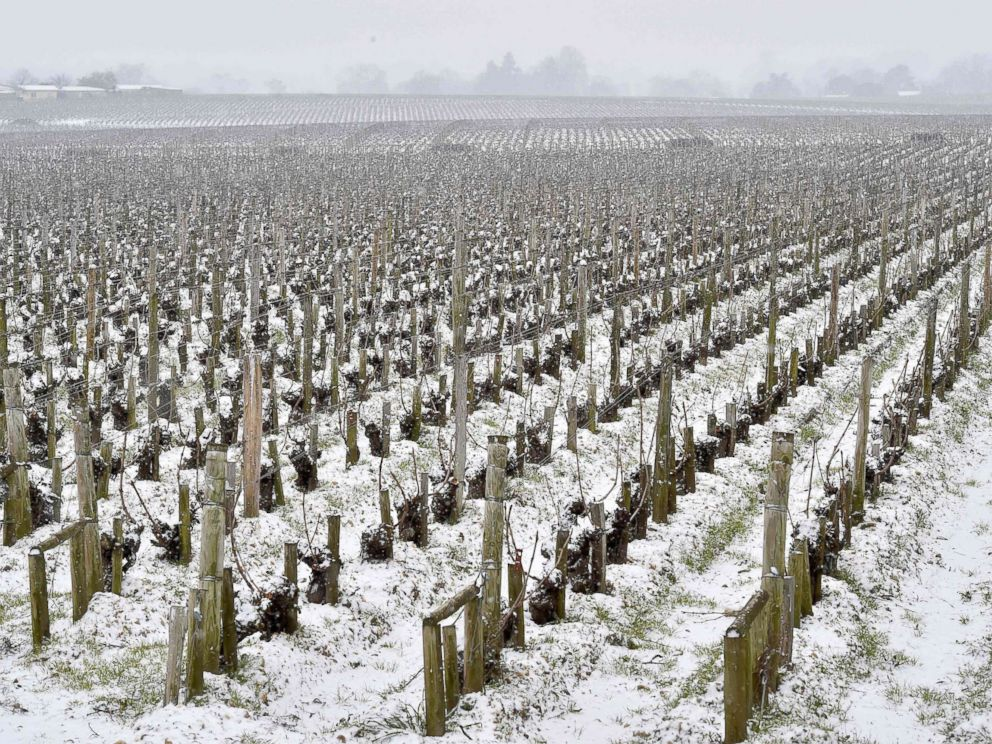 PHOTO: Snow covers a wine vineyard in Bordeaux, France, Feb. 28, 2018.