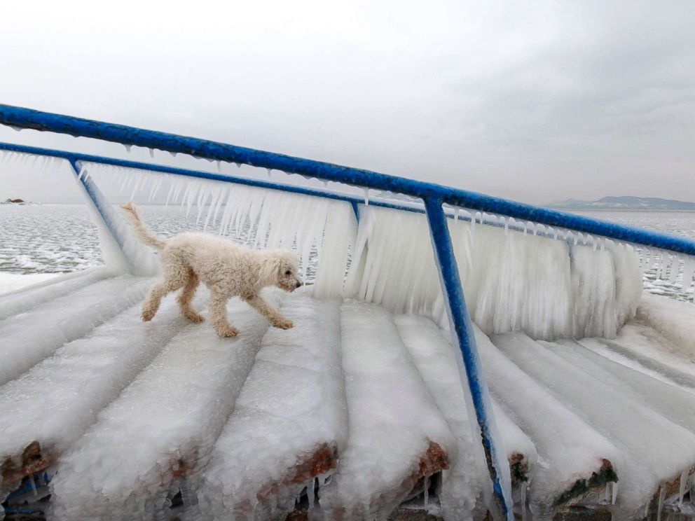 PHOTO: A dog walks on ice covering the stairs at the shore of Lake Balaton in Fonyod, Budapest, Hungary, Feb. 26, 2018.