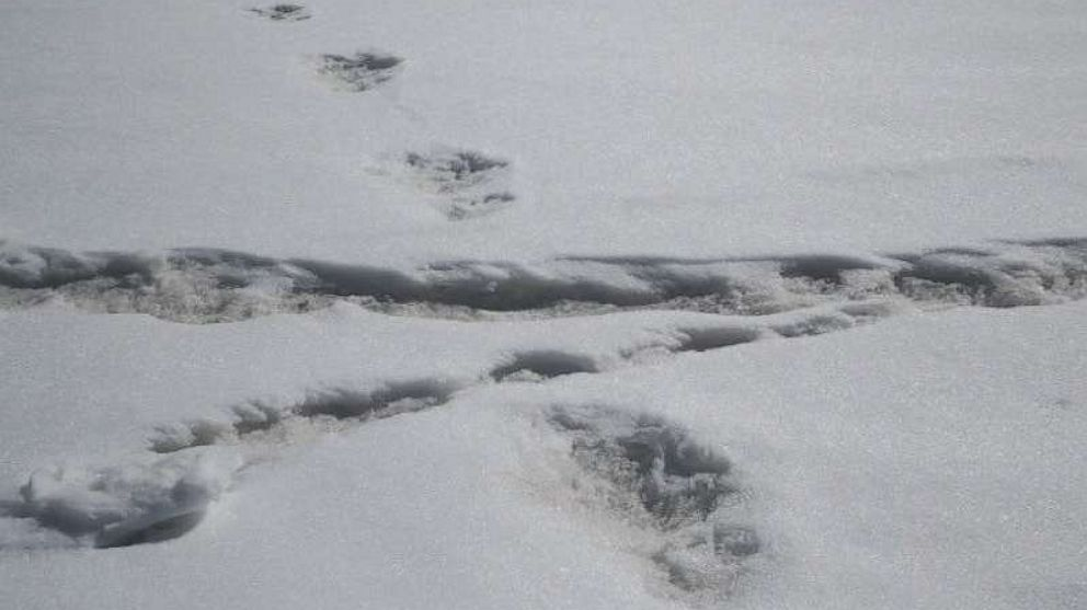 Indian army faces ridicule for posting photo of 'Yeti