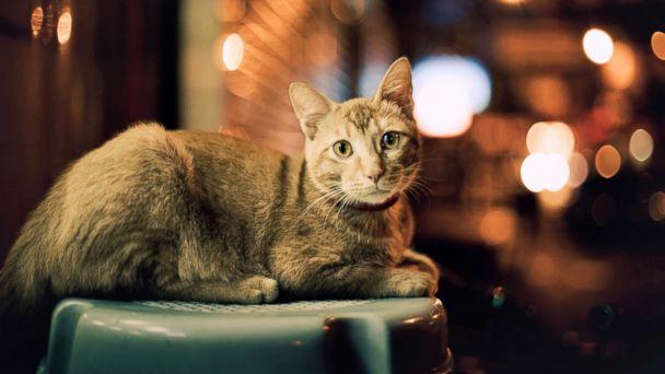 https://s.abcnews.com/images/International/street-cat-night--1-gty-mem-180921_hpMain_16x9_608.jpg
