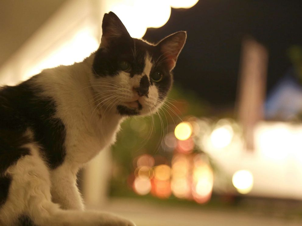PHOTO: In this undated stock photo shows a cat at night on the street.