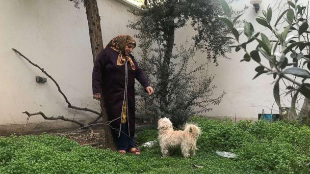 Dog walking banned in Iran's capital
