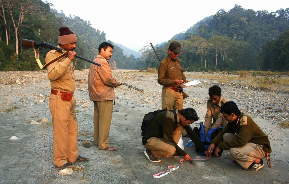 PHOTO: Indian forestry officials measure tiger paw prints during the first day of a five-day long tiger census at the Mahanada Wildlife Sanctuary, in the outskirts of Siliguri, Dec. 18, 2008.