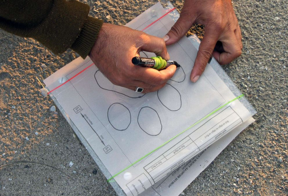 PHOTO: An Indian forestry official sketches a tiger paw print during the first day of a five-day long tiger census at the Mahanada Wildlife Sanctuary, in the outskirts of Siliguri, Dec. 18, 2008.