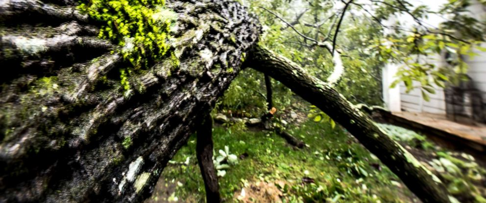 PHOTO: A fallen tree is pictured in this undated stock photo.