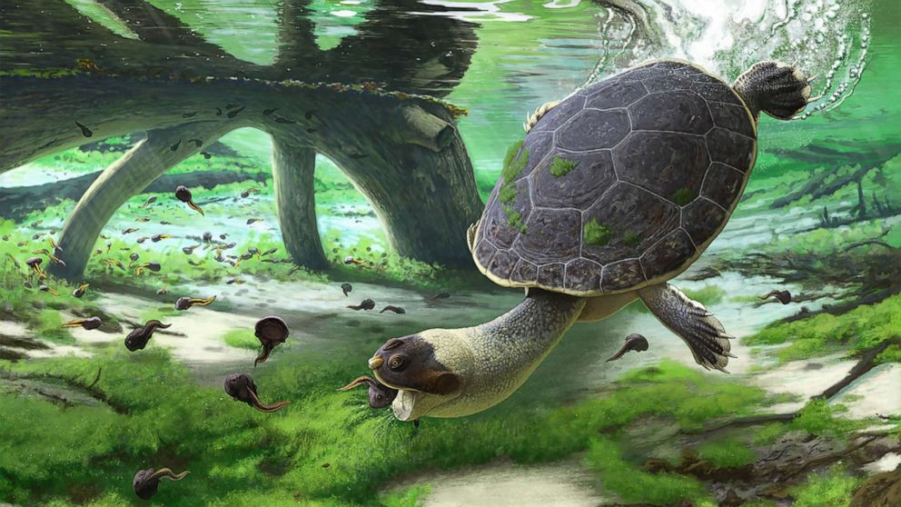 New species of prehistoric turtle discovered in Madagascar - ABC News