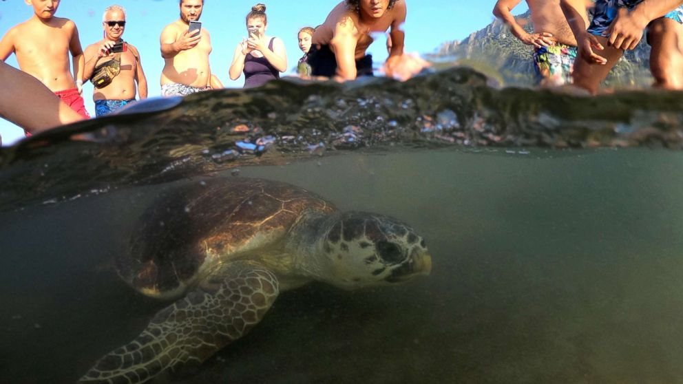 A sea turtle swims back to the sea following her release after treatment at the Sea Turtle Rescue Center (DEKAMER) as tourists look on at Iztuzu Beach near Dalyan in Mugla, Turkey, Aug. 25, 2018.