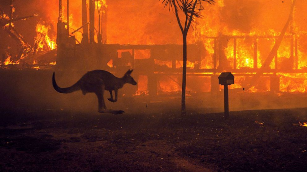 Kangaroo in front of burning house
