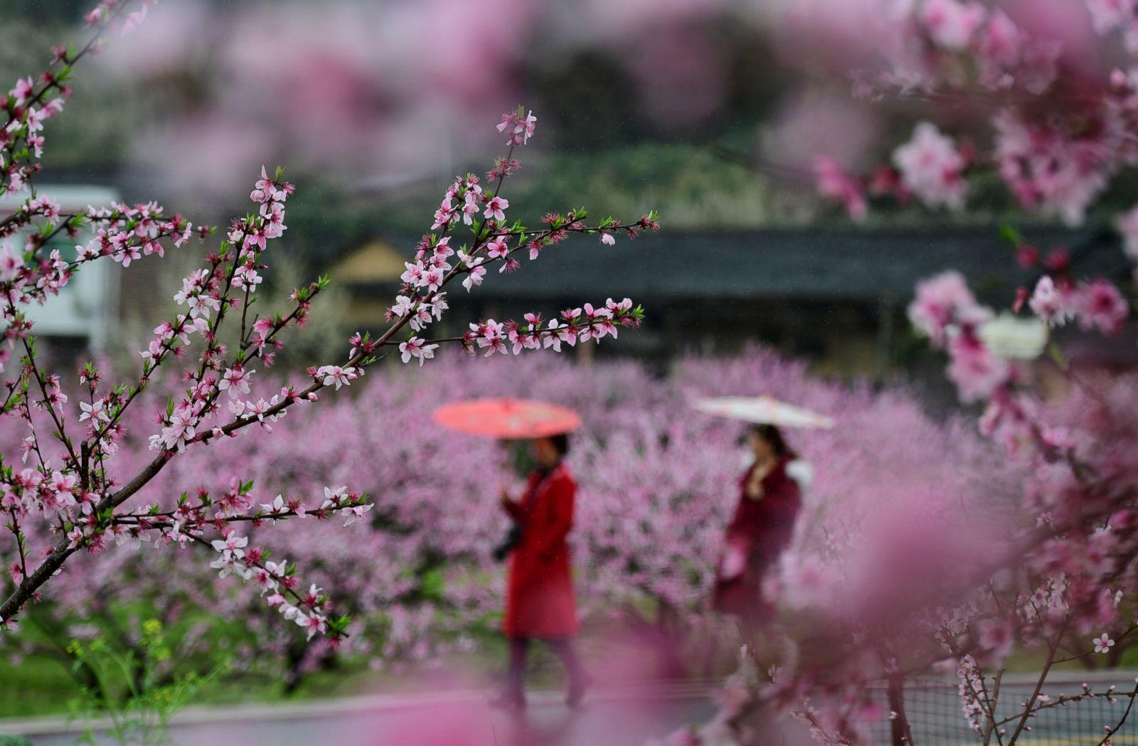 пекин весной март фотографии переделки автомобиля