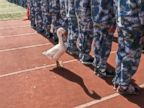 PHOTO: Geese, goats and wild ducks can be seen at a school when students attend military training in Wuxi, east Chinas Jiangsu Province, Aug. 24, 2018.