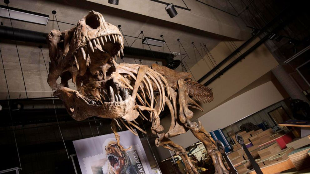 Paleontologists Report World's Biggest Tyrannosaurus Rex Found