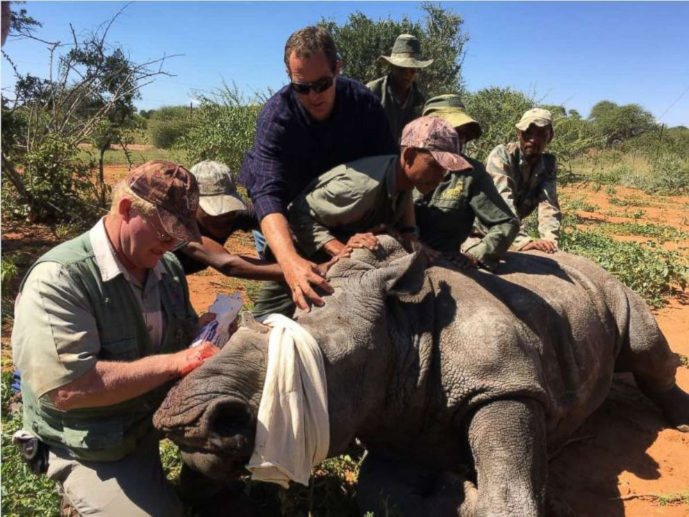 PHOTO: A rhinoceros named Vyrsaat lost his horn and most of his face to poachers in South Africa. Constant medical care from veterinarian Louis Greef, left, has kept him alive.