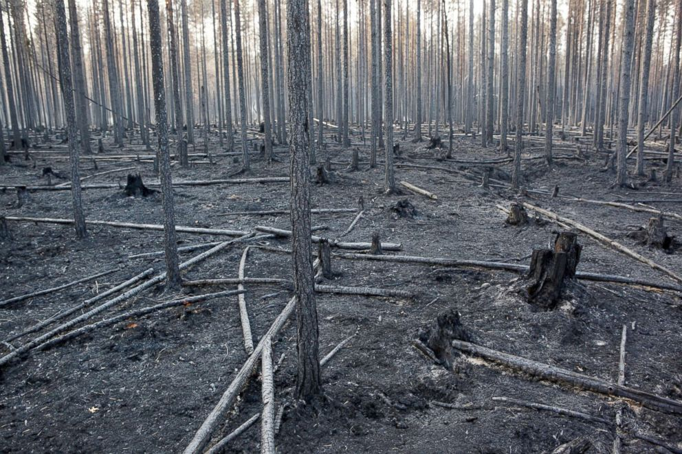 PHOTO: The burnt out forest around Angra, Ljusdal municipality, after a wildfire ravaged central Sweden, July 22, 2018.