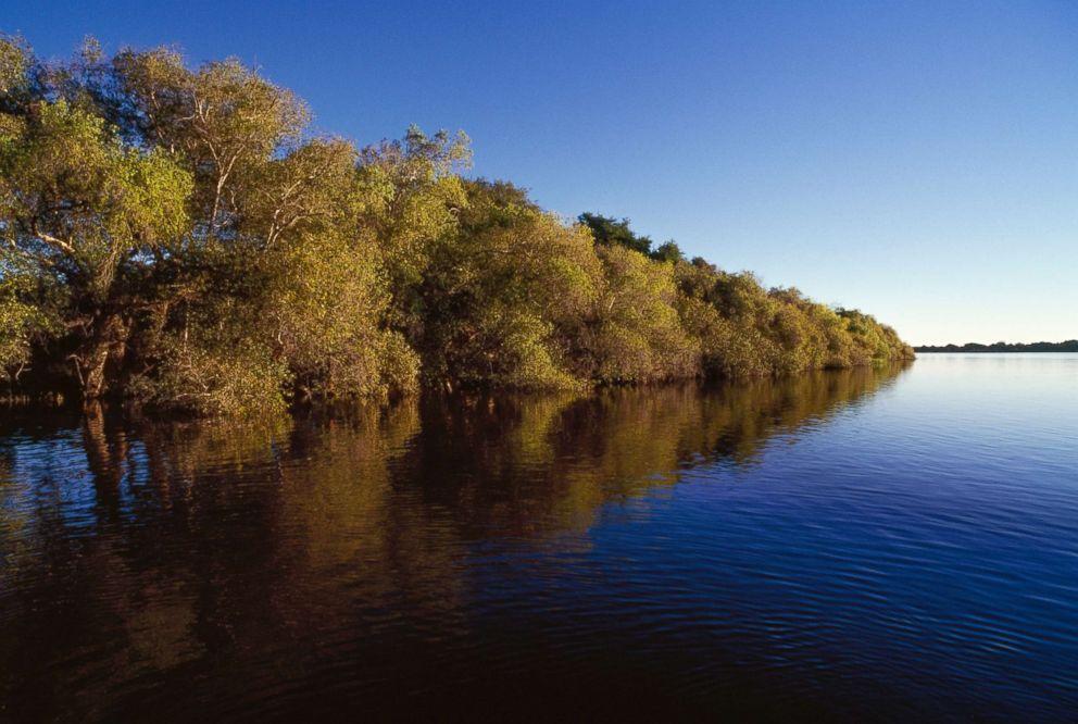 PHOTO: Vegetation along the banks of the Zambezi River, Mosi-oa-Tunya National Park, Zambia.