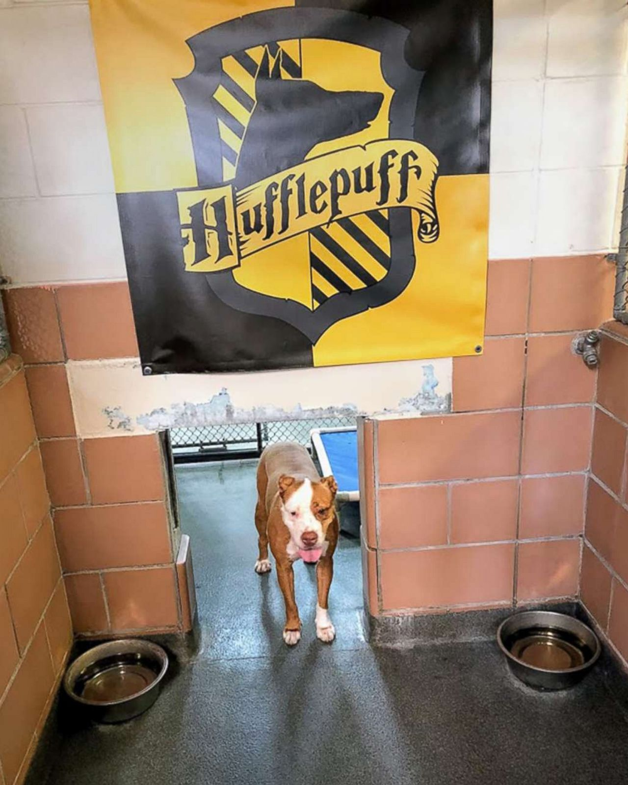 Gryffindogs or Hufflefluff: Animal shelter sorts dogs into