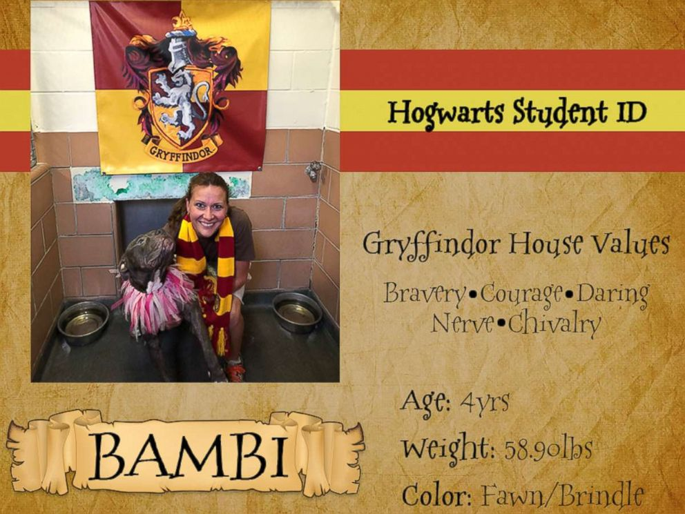 PHOTO: An ID card for a dog in the Gryffindor house shows the houses values of bravery, courage and more.
