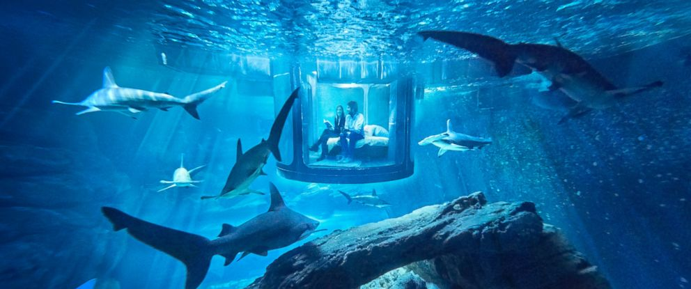 PHOTO: Shark Tank Airbnb Bedroom Lets You Sleep With the Fishes, Literally