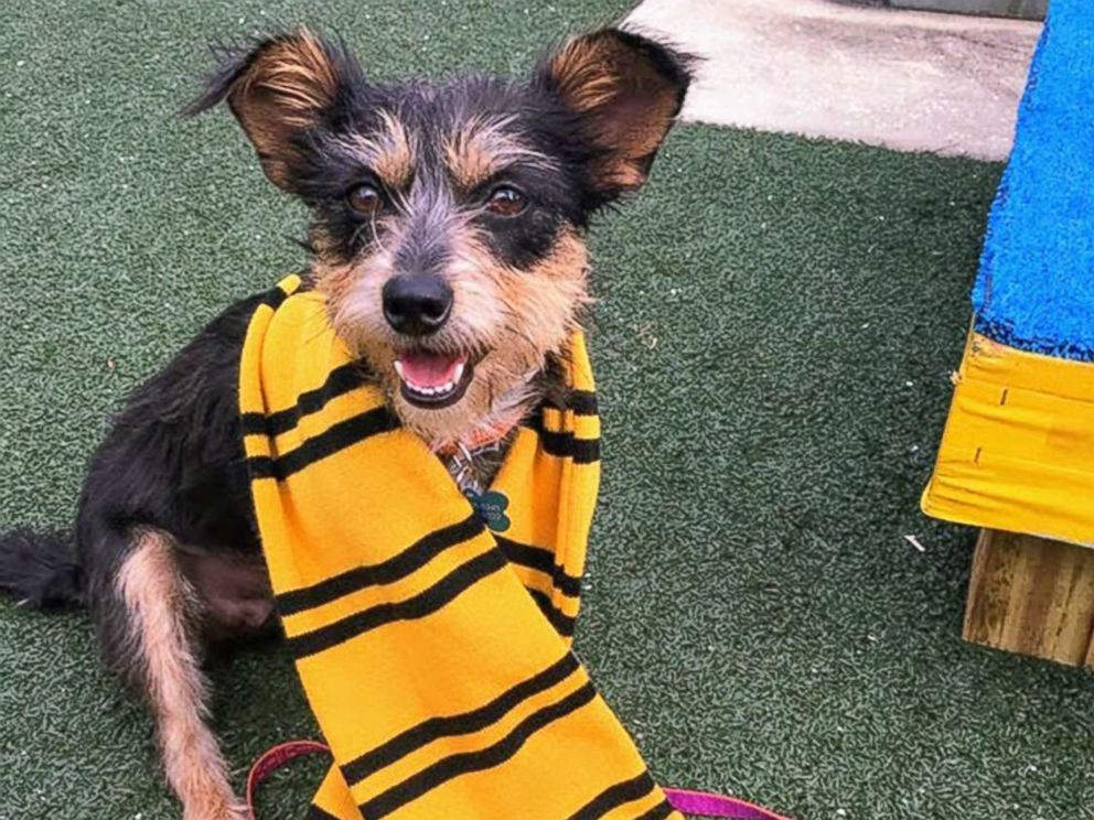 PHOTO: A dog wears a Harry Potter-style scarf at the Pet Alliance of Greater Orlando.