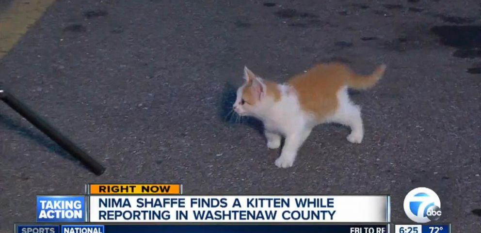 The kitten, now named Lucky Seven, stole the show in the WXYZ live shot.
