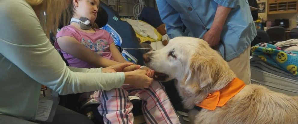 VIDEO: Longest-working therapy dog retires from Seattle Childrens Hospital