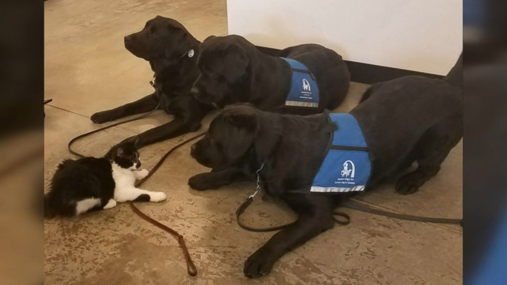 Kitten named DOG rules the roost among 23 support dogs