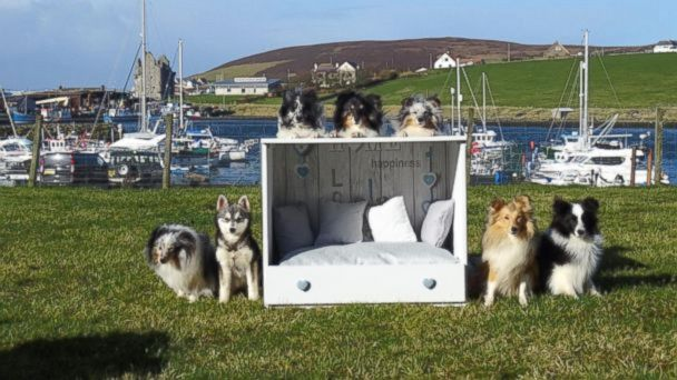 c8d436558235 buffering. Replay. Woman turns dressers into custom personalized dog beds.  Kaylee Robertson ...