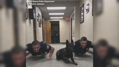 Spanish police dog performs 'CPR' on officer Video 171121 abc social dog pushups 16x9 384