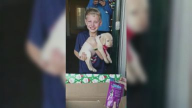 'VIDEO: Boy being surprised with dog for Christmas is pure magic to see' from the web at 'https://s.abcnews.com/images/Lifestyle/171221_vod_dog_16x9_384.jpg'