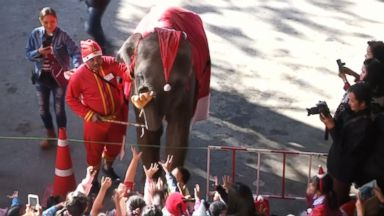 'VIDEO: In Thailand, a pachyderm really knows how to spread Christmas cheer.' from the web at 'https://s.abcnews.com/images/Lifestyle/171222_abc_social_elephant_gifts_16x9_384.jpg'