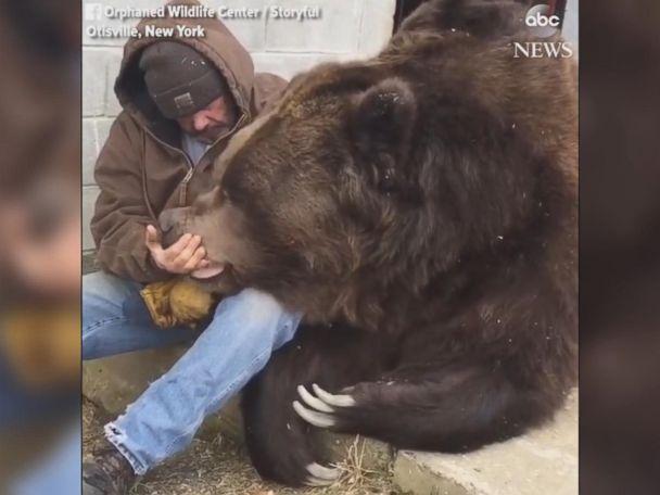 WATCH:  Man comforts massive bear