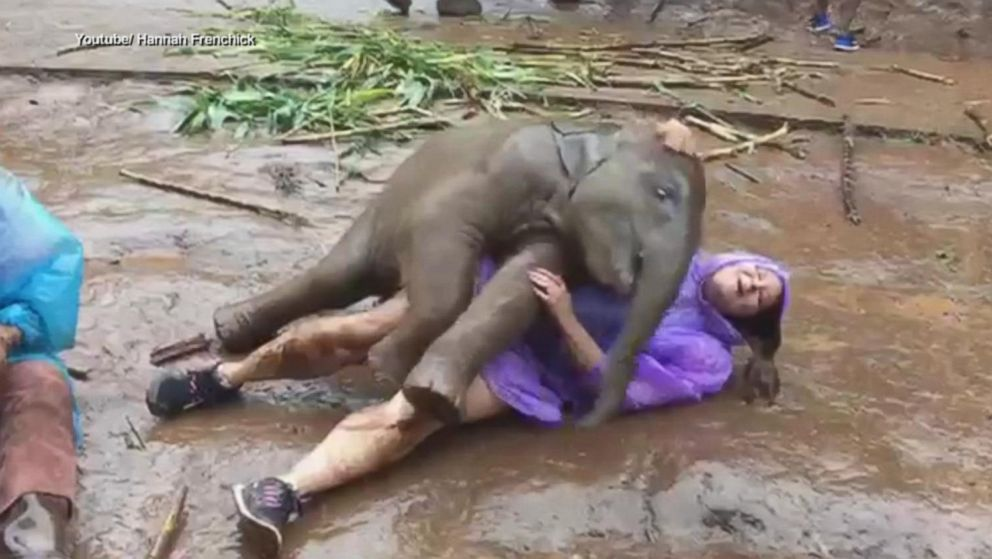 woman frolics with baby elephant