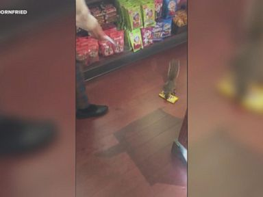 WATCH: Squirrel steals candy from Disney's Magic Kingdom