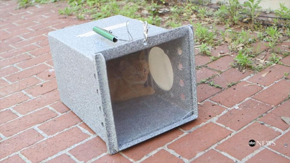 'Blue Collar Cats' enlisted to fight off rodents in Washington, D.C.