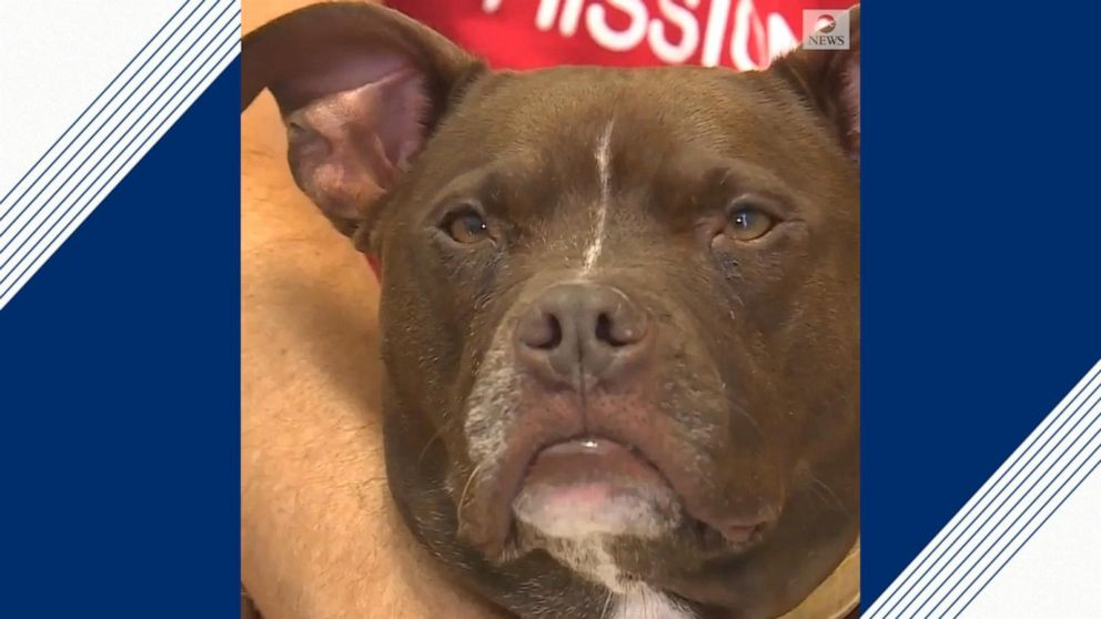 Kansas City man moves in with shelter dog, plans to stay there until she gets adopted