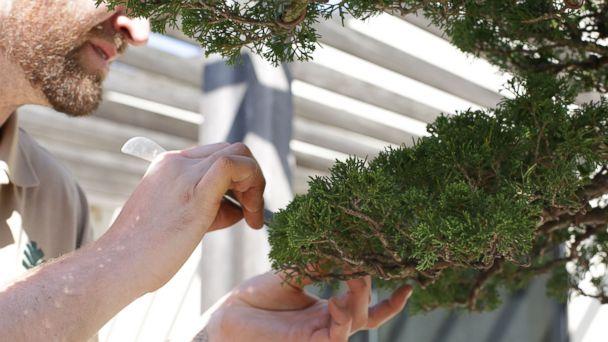 Meet the 26-year-old aspiring bonsai master of Washington, DC