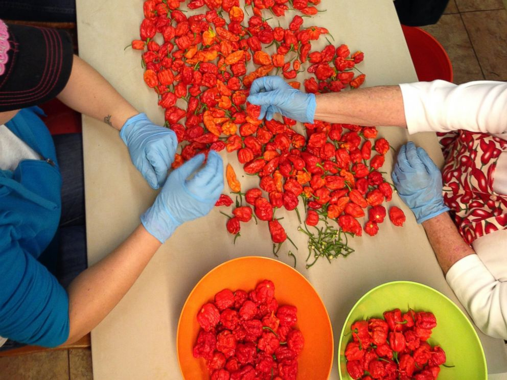 PHOTO: Carolina Reapers are a crossbreed made by farmer Ed Currie at The Puckerbutt Pepper Company in Rock Hill, South Carolina. These peppers are said to be more than 100 times hotter than a jalapeno.