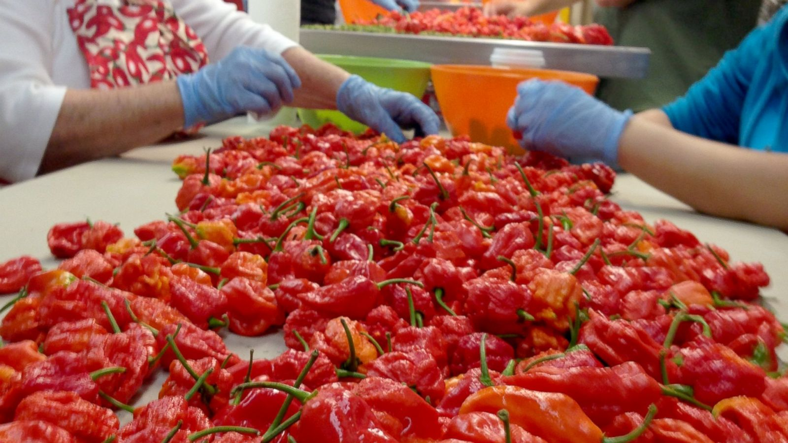 carolina reaper peppers are at least 100 times hotter than jalapeno