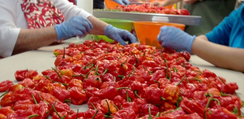 "PHOTO: ""Carolina Reapers"" are a crossbreed made by farmer Ed Currie at The Puckerbutt Pepper Company in Rock Hill, South Carolina. These peppers are said to be more than 100 times hotter than a jalapeno."