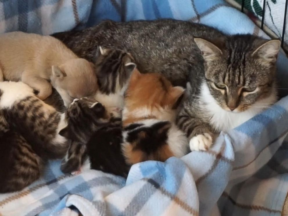 Orphaned puppy adopted by mother cat and litter of kittens for Where do newborn kittens go to the bathroom