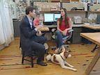 PHOTO: Pets At Work
