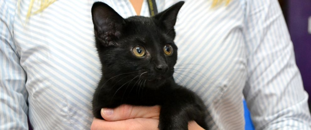 PHOTO: This shelter kitten, named Turkey, makes a gobbling noise when she eats.